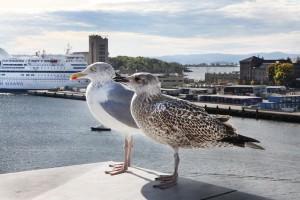 Seagulls by the Opera House, #theoslobook
